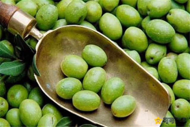 哪些人不宜吃橄榄禁忌人群有哪些